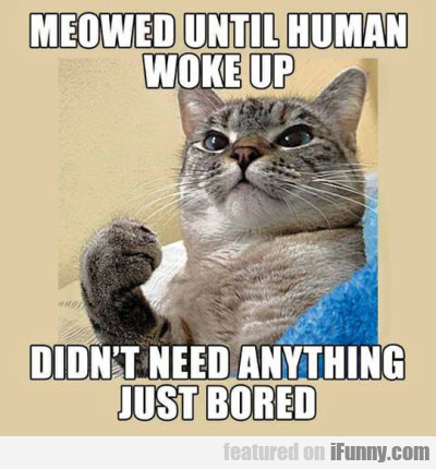Meaowed Until Human Woke Up Didnt Need Anything