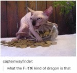 What The F Kind Of Dragon