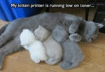 My Kitten Printer Is Running Low On Toner