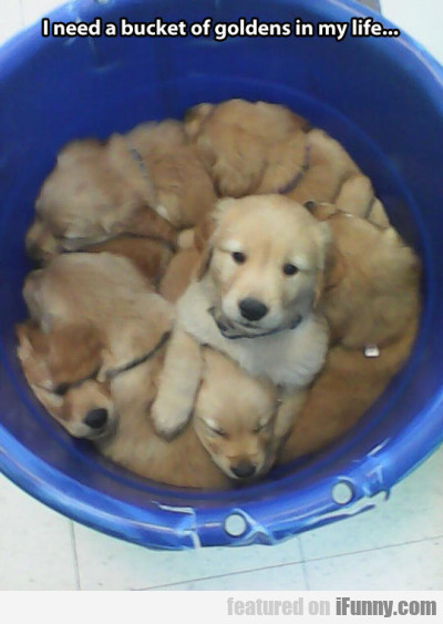 I Need A Bucket Of Goldens