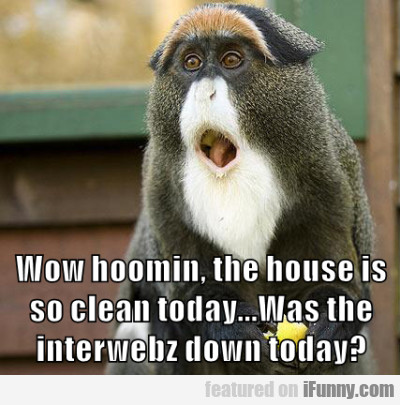 Wow Hoomin The House Is So Celan
