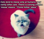 Cats Tend To Meow Only At Humans Very Rarely