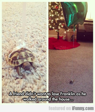 A Friend Didnt Want To Lose Franklin As He Walked