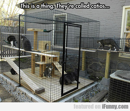 This Is A Thing. They're Called Catios...