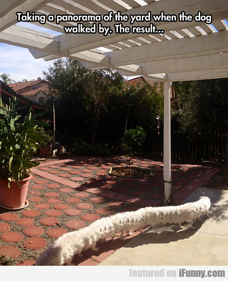 taking a panorama of the yard when the dog walked