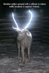 Reindeer Antlers Sprayed With