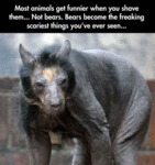 Most Animals Get Funnier When You Shave Them