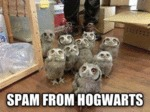 Spam From Hogwarts