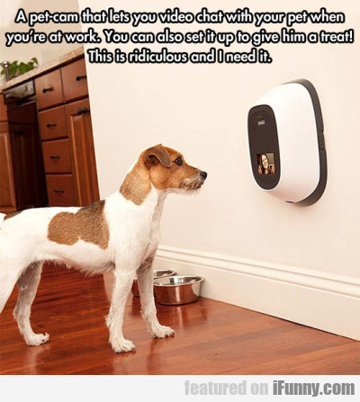 a pet cam that lets you video chat with your pet
