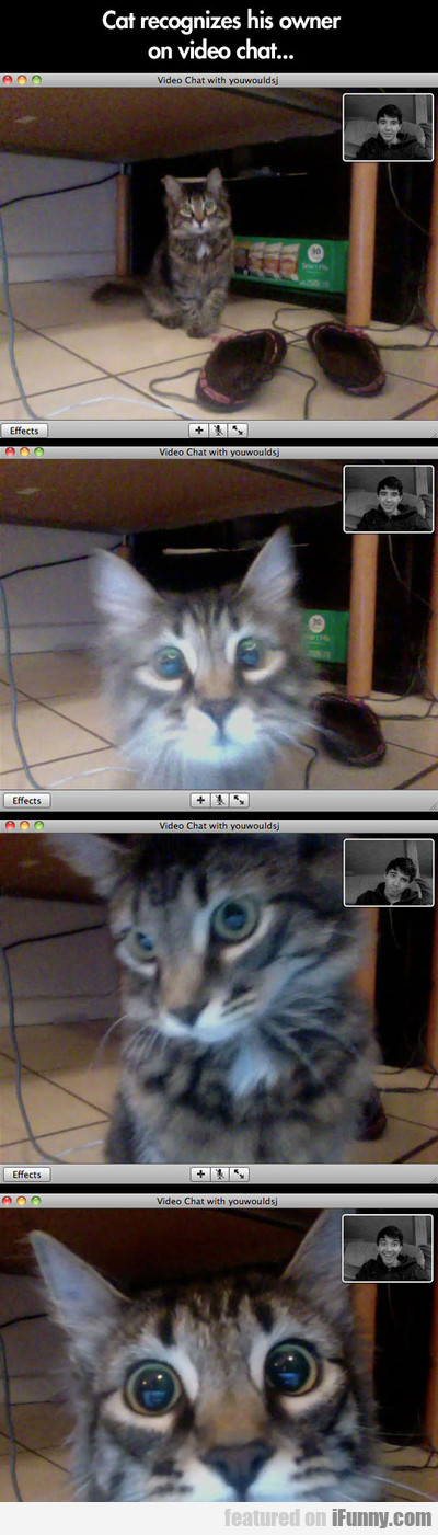 Cat Recognizes His Owner On Video Chat