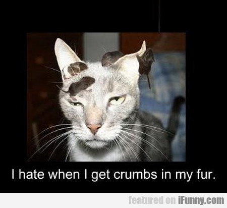 i hate when i get crumbs in my fur