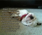 Doggie Dreams Of A Perfect World