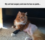 My Cat Had Surgery