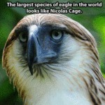The Largest Species Of Eagle In The World...