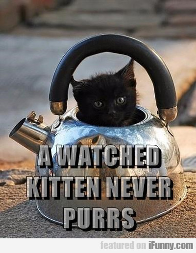 A Watched Kitten Never Purrs