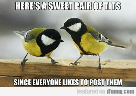Here's A Sweet Pair Of Tits...