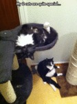 My 2 Cats Are Quite Special...