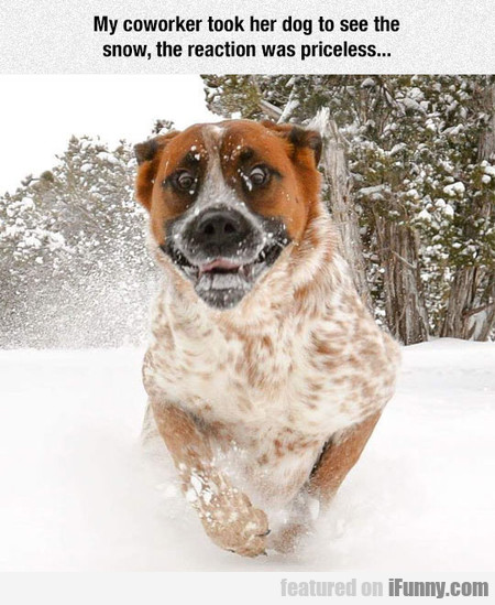 my coworker took her dog to see the snow