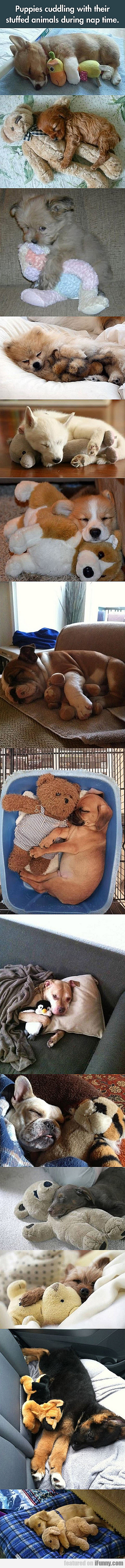 Puppies Cuddling With Their Stuffed Animals