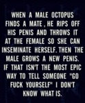 When A Male Octopus Finds A Mate...