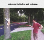 I Took My Cat For His First Walk Yesterday...