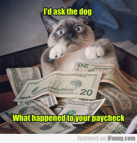 i'd ask the dog what happened to your paycheck