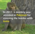 In 2011, A Monkey Was Arrested...