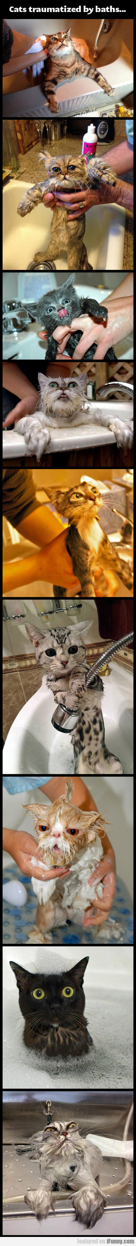 Cats Traumatized By Baths...
