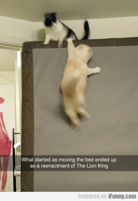 What Started As Moving The Bed Ended Up