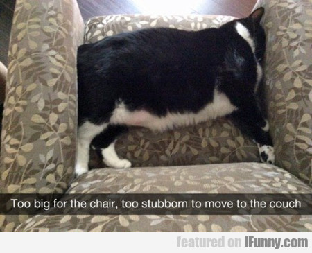 too big for the chair, too stubborn to move