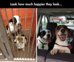 Look How Much Happier They Look...