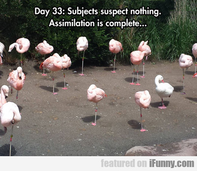 Day 33: Subjects Suspect Nothing...