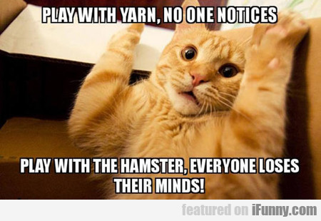 Play With Yarn, No One Notices