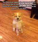 This Pomeranian Apparently Got So Upset With His N