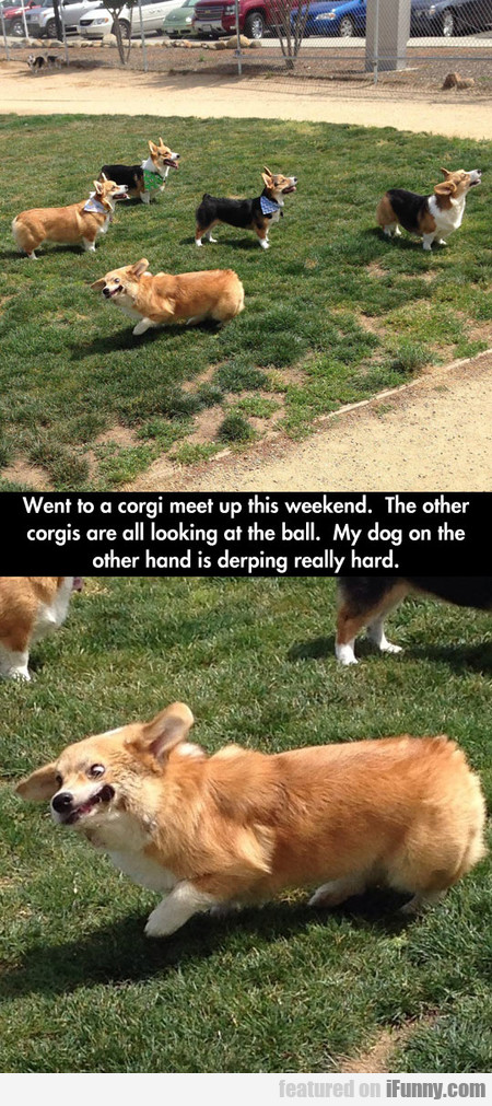 Went To A Corgi Meet Up This Weekend...