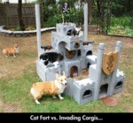 Cat Fort Vs Invading Corgis...