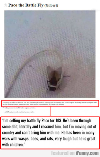 Paco The Battle Fly...