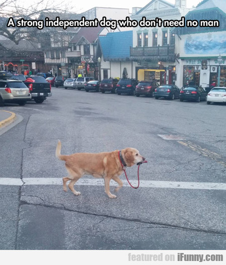 a strong independent dog who doesn't need no man