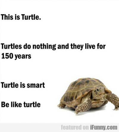 This Is Turtle...