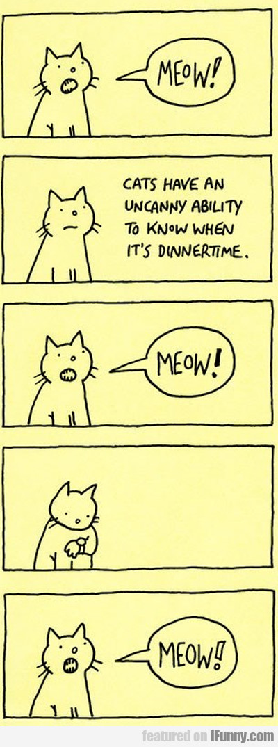 Meow Cats Have An Uncanny Ability