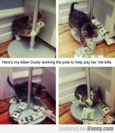 Heres My Kitten Dusty Working The Pole