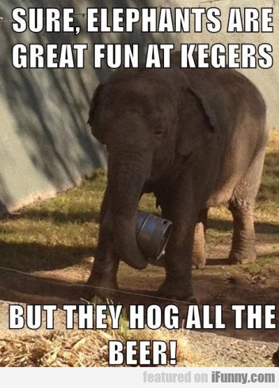 sure elephants are great fun at