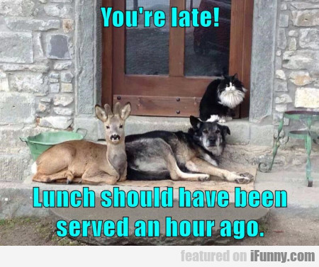 you re late lunch should have been