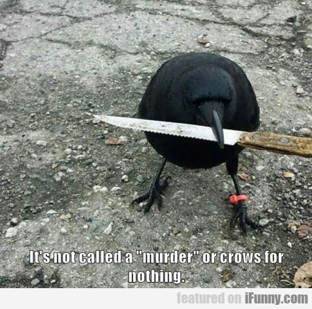 Its Not Called A Murder Or Crows