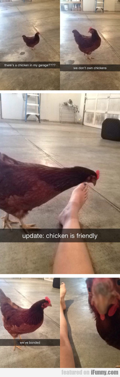 there s a chicken in my garage