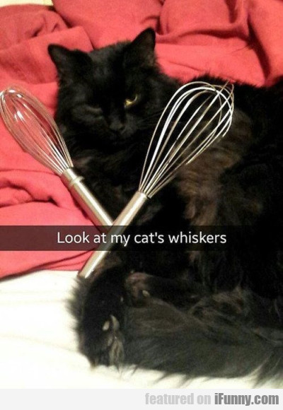 Look At My Cats Whiskers