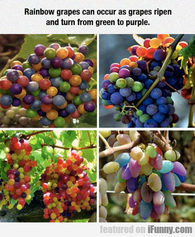 rainbow grapes can occur...