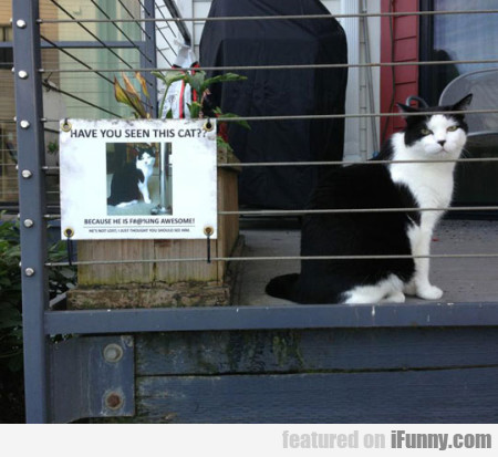 Have You Seen This Cat Because