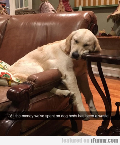 all the money we ve spent on dog