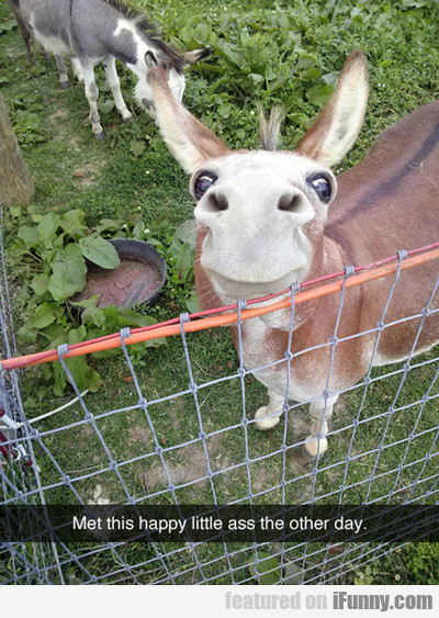 I Met This Happy Little Ass The Other Day...